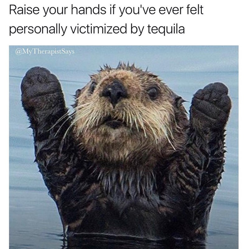 Funny meme about feeling personally victimized by tequila, cute otter photo.