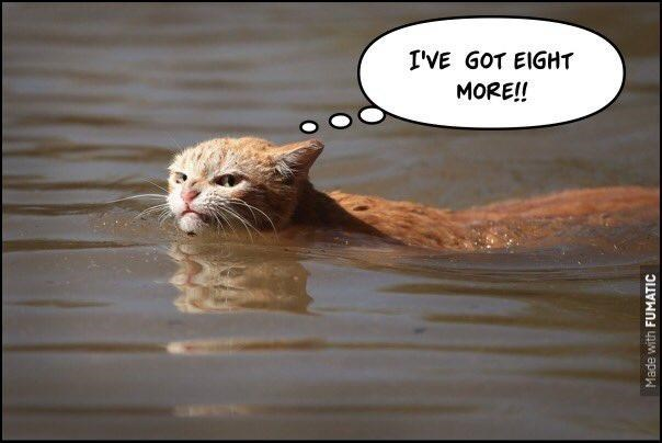 Funny meme of Swimming Angry Cat who says he has 8 more