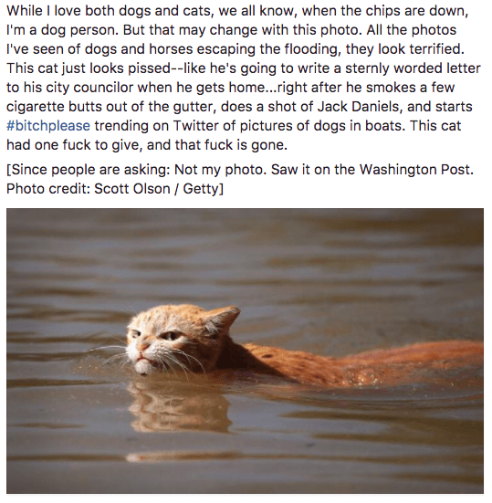 Angry swimming cat story of why cats are awesome