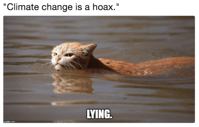 Meme of angry swimming cat about when people say climate change is a hoax.