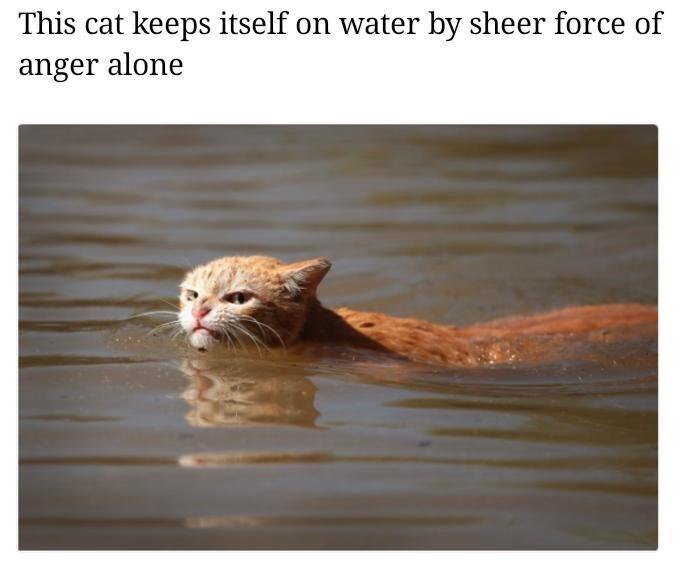Harvey cat meme about anger
