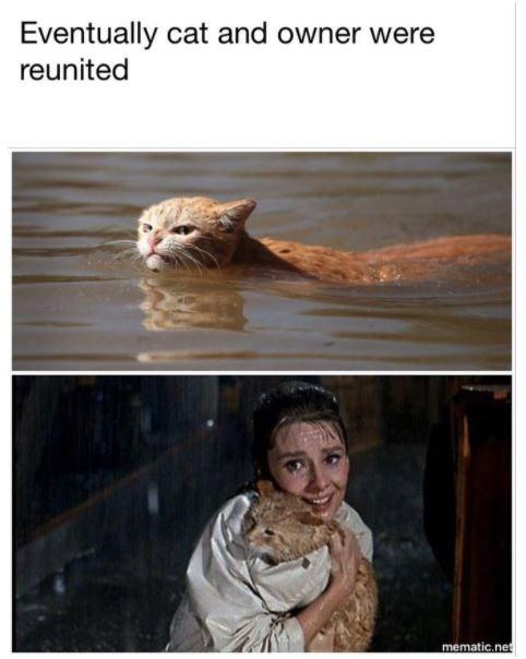 Funny Harvey Cat meme