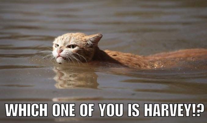 Funny Harvey cat meme of angry cat looking for the one named Harvey.
