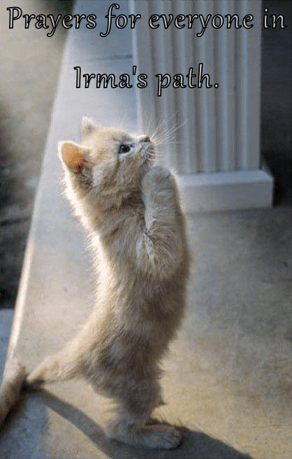 Cat making prayer gesture with a nice message to those affected by Hurricane Irma