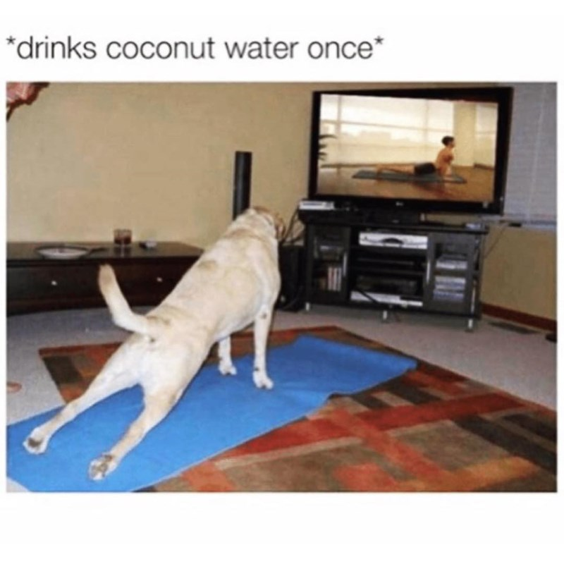 Funny meme about a dog doing yoga after drinking coconut water.