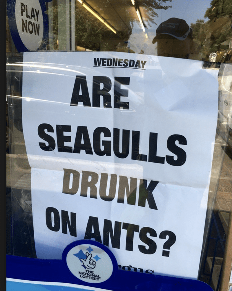 funny headline - Text - PLAY NOW WEDNESDAY ARE SEAGULLS DRUNK ON ANTS? THE NATIONAL LOTTERY