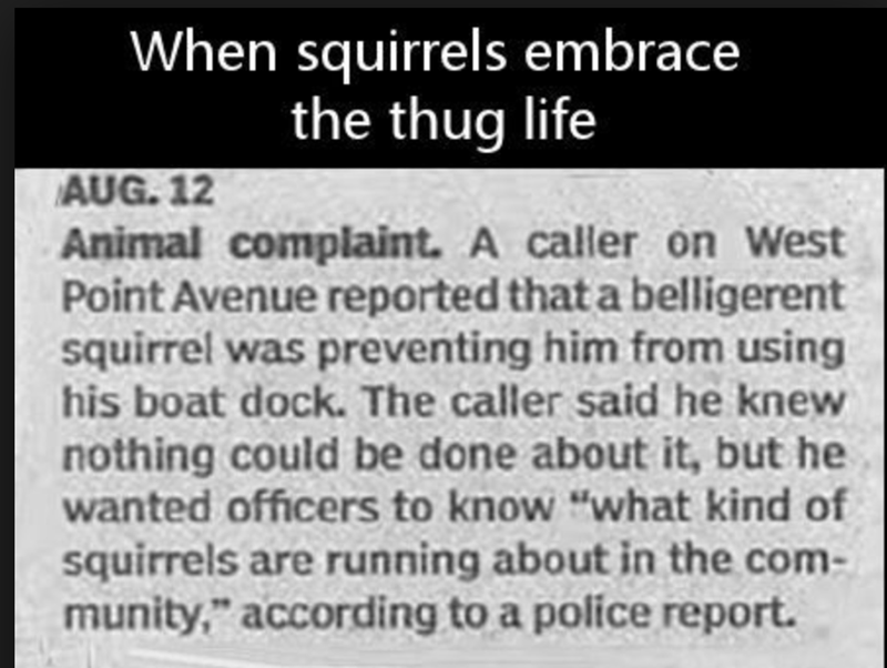 """funny headline - Text - When squirrels embrace the thug life AUG. 12 Animal complaint. A caller on West Point Avenue reported that a belligerent quirrel was preventing him from using his boat dock. The caller said he knew nothing could be done about it, but he wanted officers to know """"what kind of squirrels are running about in the com- munity,"""" according to a políce report."""