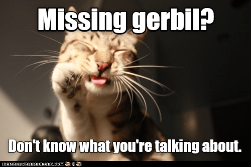 missing gerbil cat memes - 9073592064