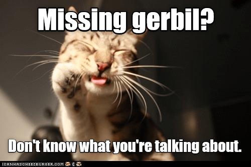 missing gerbil cat memes - 9073592064