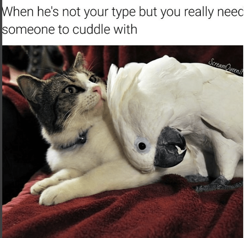 Funny meme of a cat and parrot cuddling