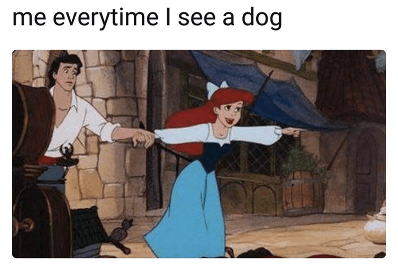 cute meme about how to behave when you see a dog