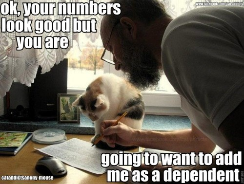 Cat meme of helping the cat do the taxes.