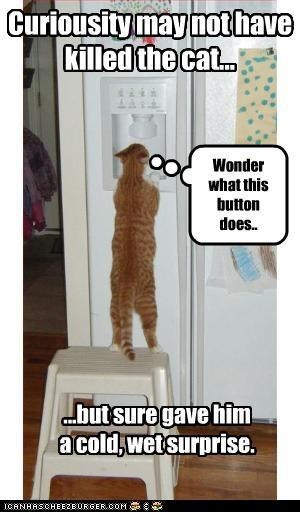 Cat - Curiousity may not have Killed the cat.. Wonder what this button does.. .butsure gave him acold,wet surprise CANHASCHEE2EURGERCOM