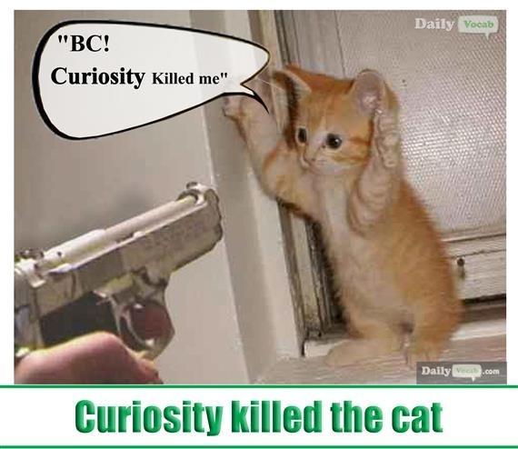 "Cat - Daily Vocab ""BC! Curiosity Killed me"" Daily Vec.com Curiosity killed the cat"