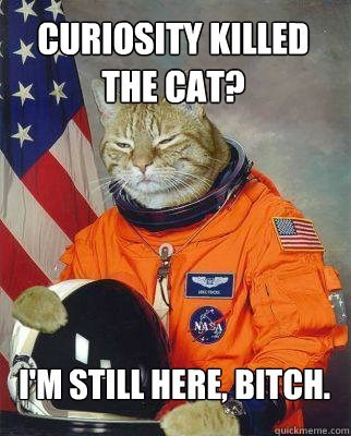 Cat - CURIOSITY KILLED THE CAT? NASA IM STILL HERE, BITCH. quickmeme.com