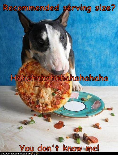 Cheezburger Image 9073739008