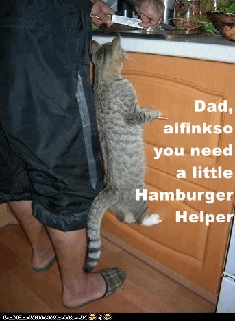 Cheezburger Image 9073793536