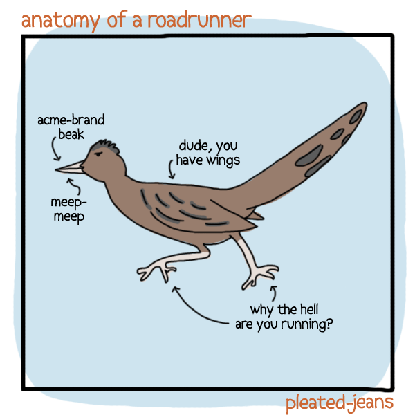 Bird - anatomy of a roadru nner acme-brand beak dude, you have wings meеp- mеер why the hell are you running? pleated-jeans