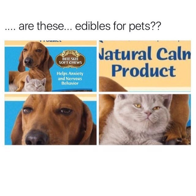 Funny meme about edibles for pets.