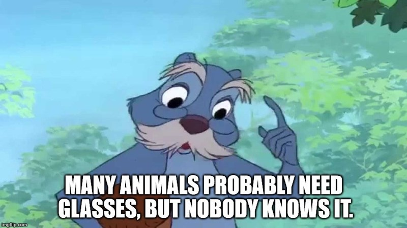 Animated cartoon - MANY ANIMALS PROBABLY NEED GLASSES, BUT NOBODY KNOWS IT imgilip.com
