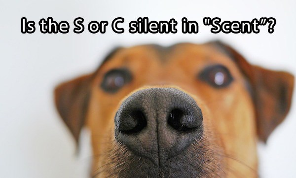 doggo meme asking if the s or c silent in scent