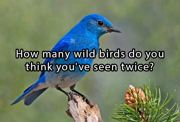 meme asking how many wild birds do you think you've see twice