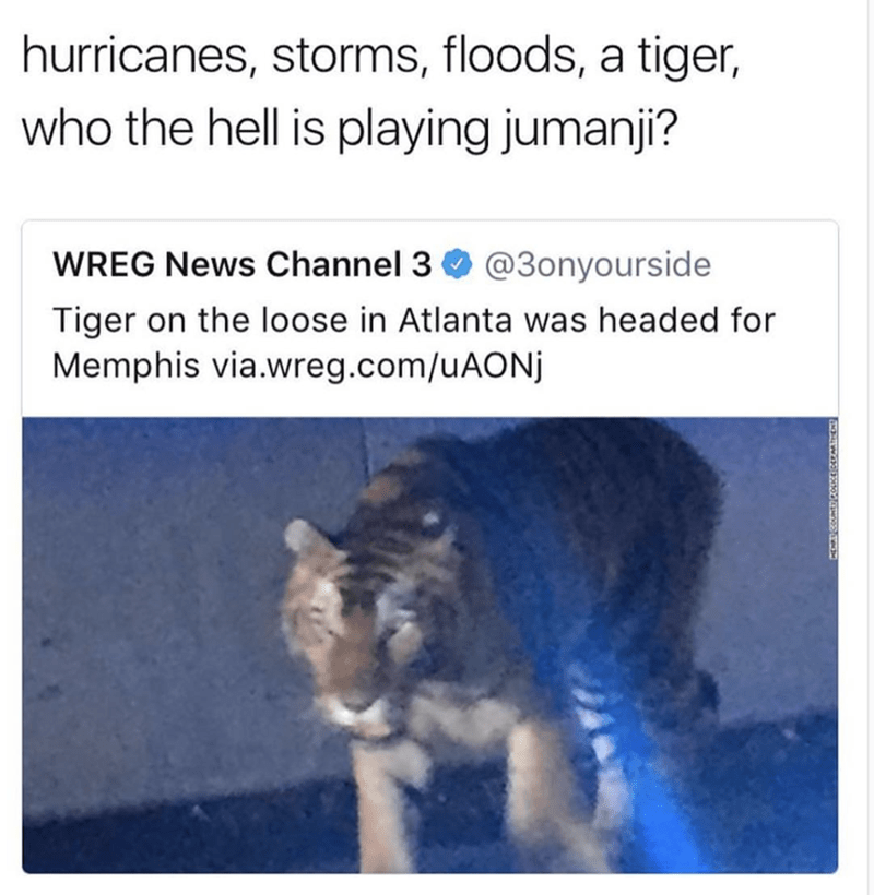 Text - hurricanes, storms, floods, a tiger, who the hell is playing jumanji? @3onyourside WREG News Channel 3 Tiger on the loose in Atlanta was headed for Memphis via.wreg.com/uAONj