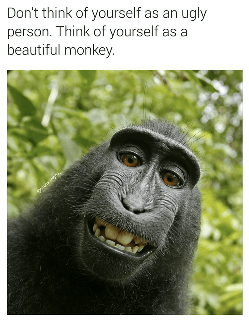 Primate - Don't think of yourself as an ugly person. Think of yourself as a beautiful monkey @chaos.reign