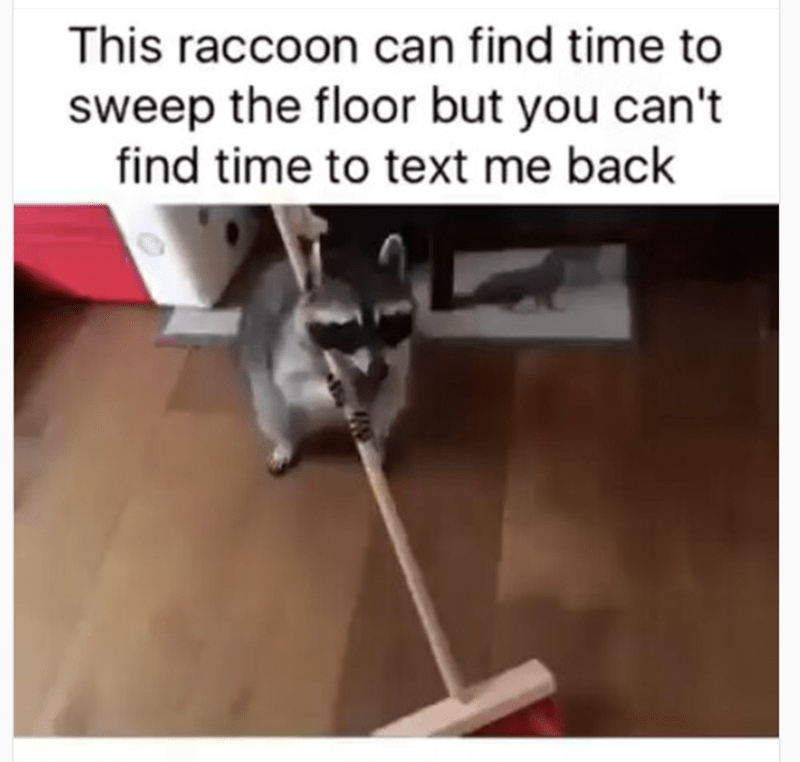 Product - This raccoon can find time to sweep the floor but you can't find time to text me back