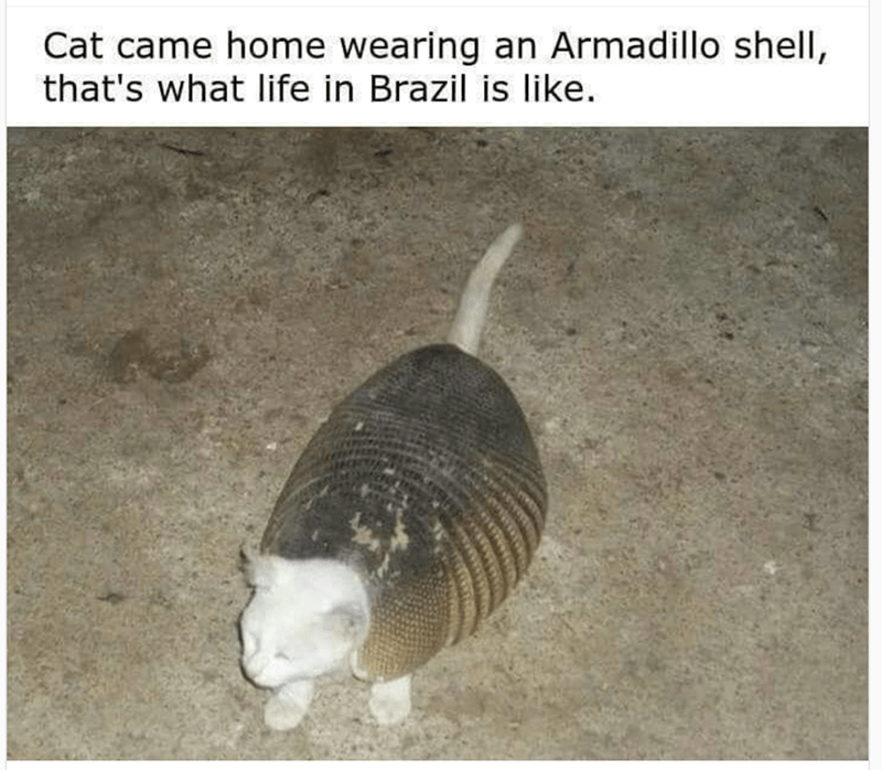 Adaptation - Cat came home wearing an Armadillo shell, that's what life in Brazil is like