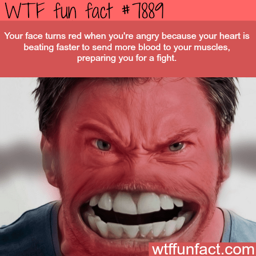 Face - WTF fun fact # 1881 Your face turns red when you're angry because your heart is beating faster to send more blood to your muscles, preparing you for a fight. wtffunfact.com