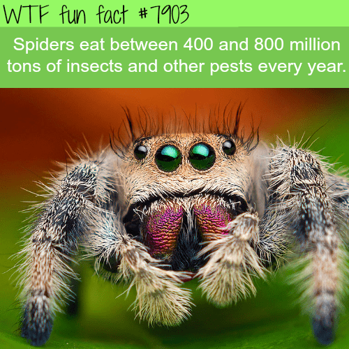 Spider - WTF fun fact # 103 Spiders eat between 400 and 800 million tons of insects and other pests every year.