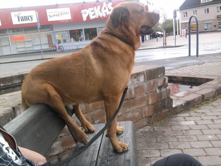 dog sitting on top of back rest bench dog meme