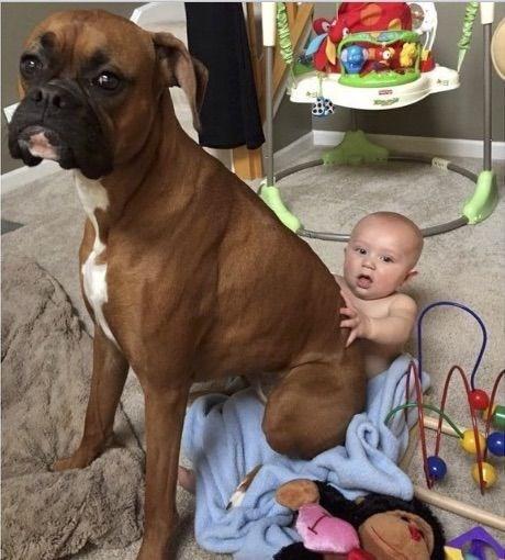 large brown dog sitting on top of baby dog meme