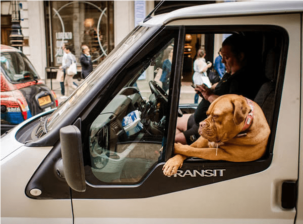 orange dog leaning out of passenger side of car window dog meme