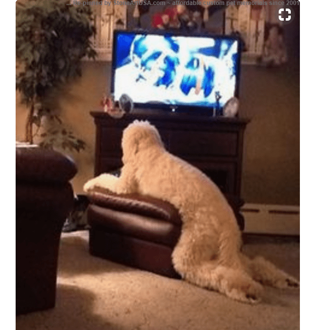a dog half sitting on a pouf in front of a tv dog meme
