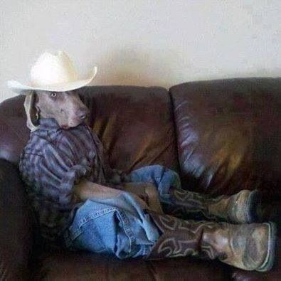 dog dressed in jeans cowboy boots and cowboy hat sitting on couch