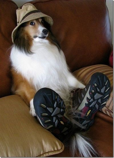 fluffy white dog wearing hat and shoes dog meme