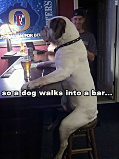 white dog sitting on stool at bar with beer in front of it dog meme