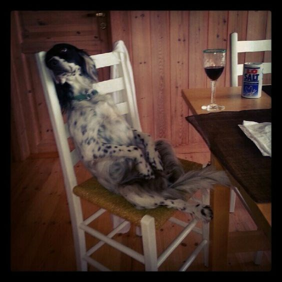 spotted black and white dog sitting on chair at table with glass of red wine dog meme