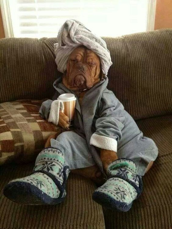 wrinkly dog in dressing gown slippers towel on head holding coffee sitting on couch dog meme
