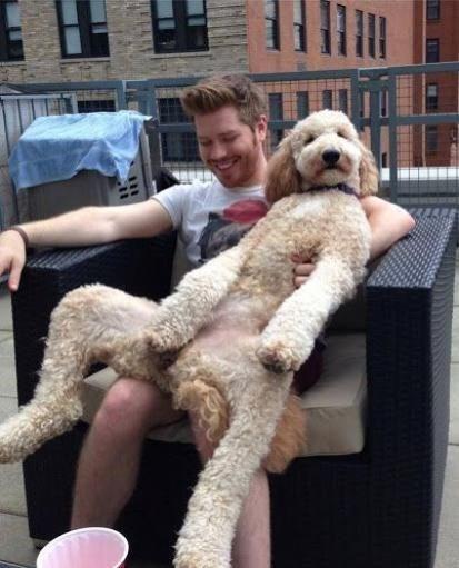 curly white dog leaning back on man dog meme