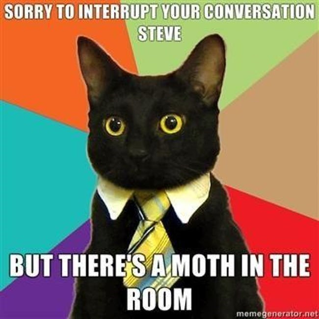 business cat - Cat - SORRY TO INTERRUPT YOUR CONVERSATION STEVE BUT THERE'S A MOTH IN THE ROOM memegenerator.net
