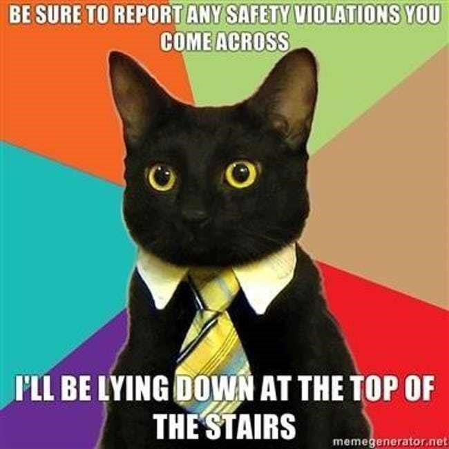 business cat - Cat - BE SURE TO REPORT ANY SAFETY VIOLATIONS YOU COME ACROSS PLL BE LYING DOWN AT THE TOP OF THESTAIRS memegenerator.net