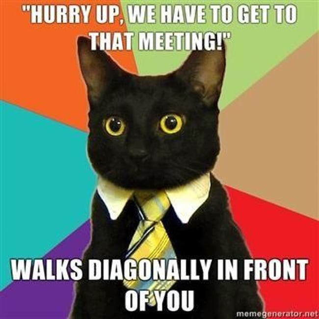 """business cat - Cat - """"HURRY UP, WE HAVE TO GET TO THAT MEETING! WALKS DIAGONALLY IN FRONT OFYOU memegenerator.net"""
