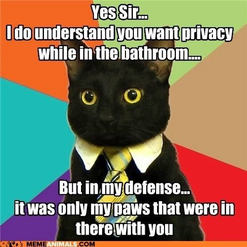 business cat - Cat - Yes Sir.. Idounderstand you want privacy while in the bathroom.. But in mydefense... it was only mypaws that were in there with you MEMEANIMALS.COM
