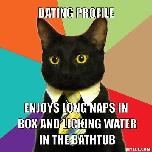 business cat - Cat - DATING PROFILE ENJOYS LONG NAPS IN BOXAND LICKING WATER IN THE BATHTUB DIYLOL.COM
