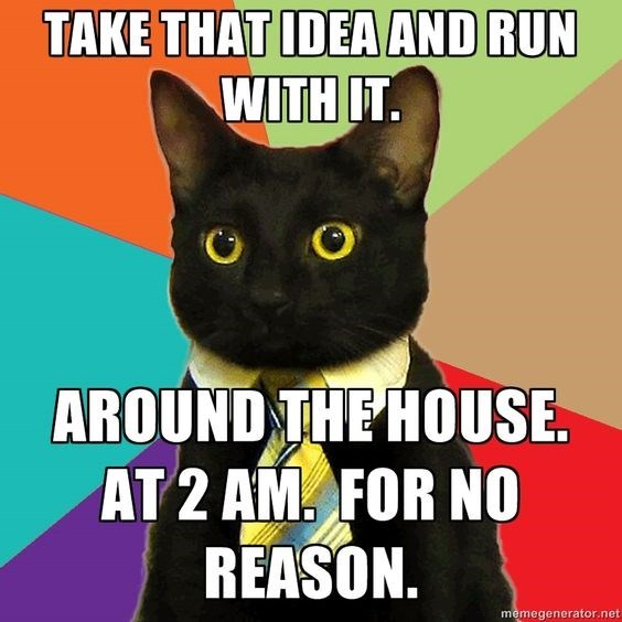 business cat - Cat - TAKE THAT IDEA AND RUN WITH IT. AROUND THE HOUSE AT 2 AM. FOR NO REASON. memegenerator.net