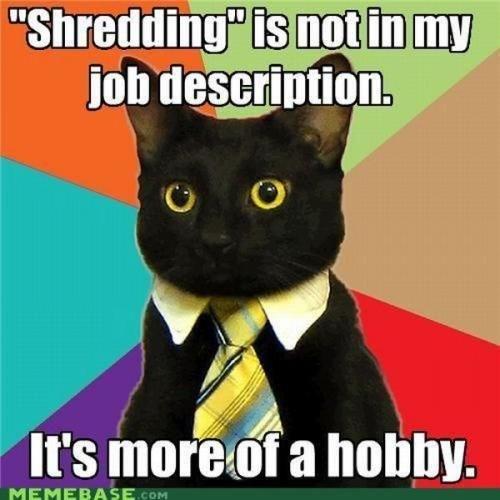 "business cat - Cat - ""Shredding"" is not in my job description. It's more of a hobby. MEMEBASE.cOM"