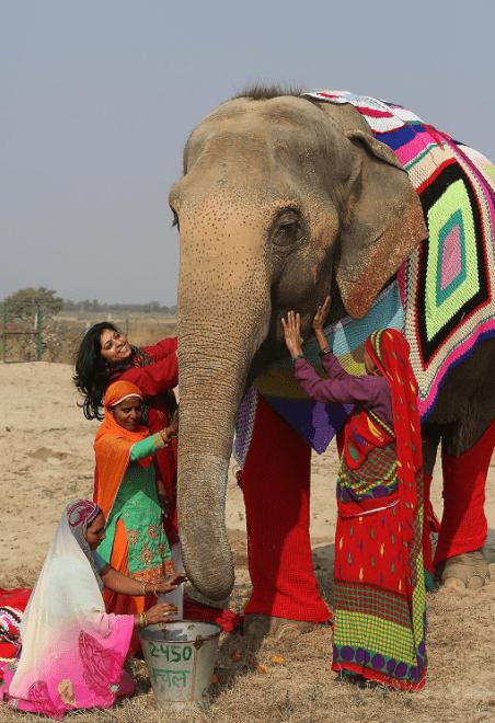 elephants wearing sweaters - Elephant - 2450